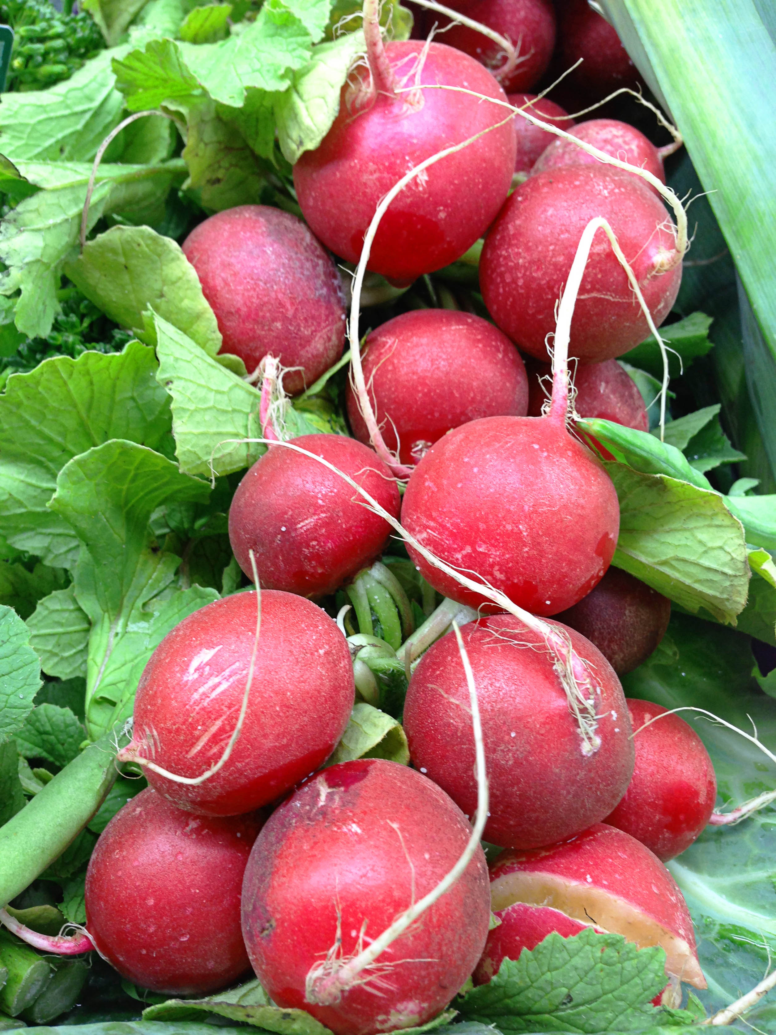 Culture du radis semer la folie - Quand cueillir les radis ...