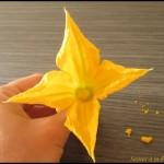 conserver fleur courgette