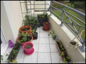 Les débuts de mon balcon potager
