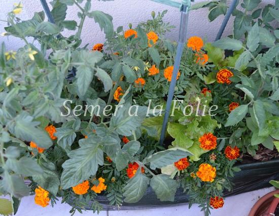 jardiniere tomates